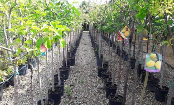 alberi_frutto